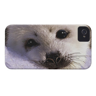 Cute Harp Seal Fantasy Art Wildlife Supporter iPhone 4 Cases