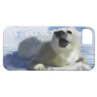 Cute Harp Seal & Ice Art for Wildlife Supporters iPhone 5 Case