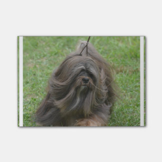 Cute Havanese Post-it Notes