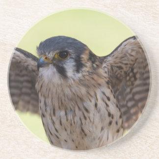 cute hawk coasters