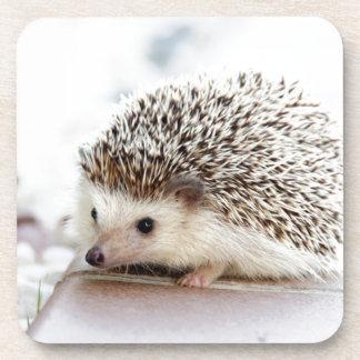 Cute Hedgehog Coaster