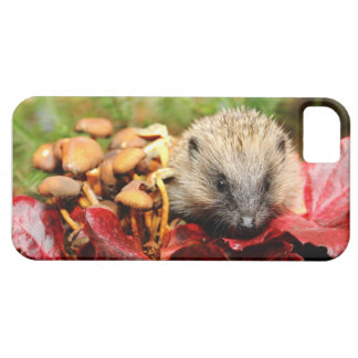 Cute Hedgehog iPhone 5 case