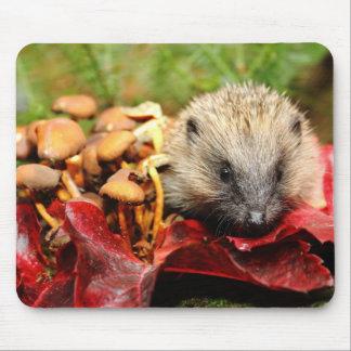 Cute hedgehog mousemat
