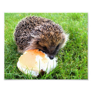 CUTE HEDGEHOG PHOTO PRINT