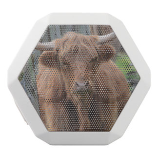 Cute Highland Cow by Fence White Boombot Rex Bluetooth Speaker