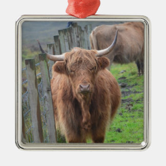 Cute Highland Cow by Fence Silver-Colored Square Decoration