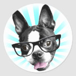 Cute! Hipster Boston Terrier
