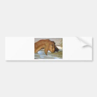Cute hungry goat bumper sticker