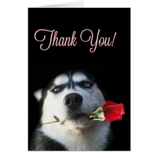 Cute Husky and Rose Thank You Card