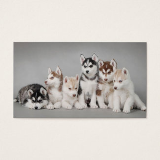 Cute husky puppes business card