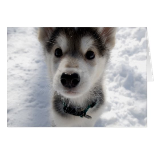 Cute husky puppy photo customisable greeting card