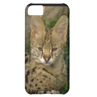 Cute iPhone 5 Cases Beautiful Baby Lynx