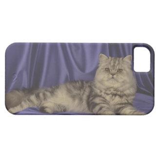 Cute iPhone 5 Cases Beautiful Cat