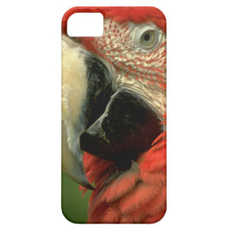 Cute iPhone 5 Cases Beautiful Macaw Parrot