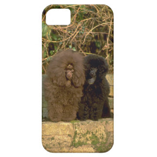 Cute iPhone 5 Cases Beautiful Poodles
