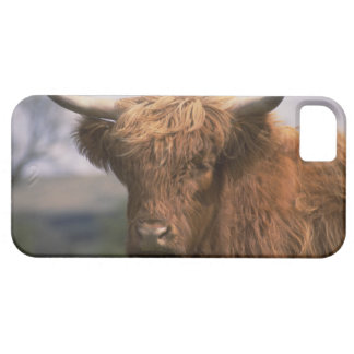 Cute iPhone 5 Cases Beautiful Scottish Cow