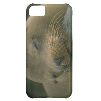 Cute iPhone 5 Cases Beautiful Sleeping Seal