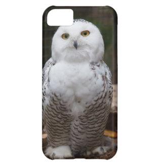 Cute iPhone 5 Cases Beautiful Snowy Owl