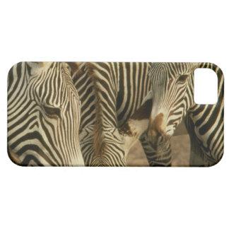 Cute iPhone 5 Cases Beautiful Zebras