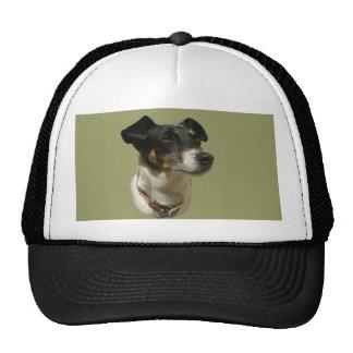 Cute Jack Russell Dog Cap