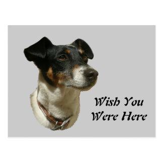 Cute Jack Russell Dog Postcard