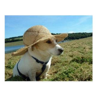 Cute Jack Russell wearing a sun hat in field Post Card