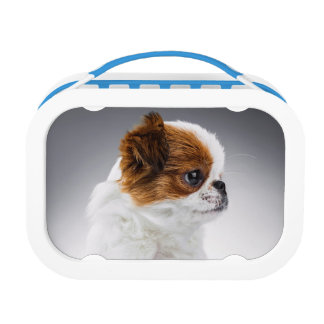 Cute Japanese Chin Puppy Lunchbox - Double Trouble