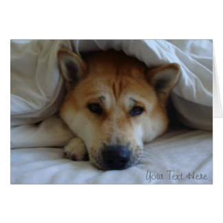 Cute japaneses akita under bed blankets card