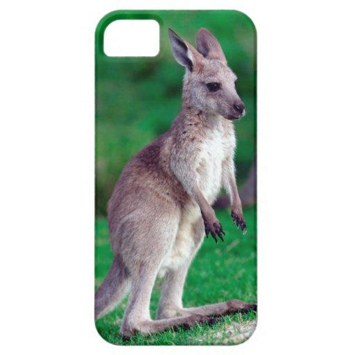 Cute joey baby Kangaroo iPhone 5 Case