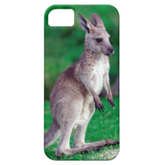 Cute joey baby Kangaroo Case For The iPhone 5