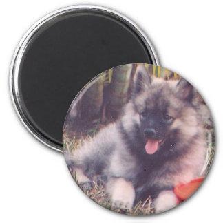 Cute Keeshond Puppy 6 Cm Round Magnet