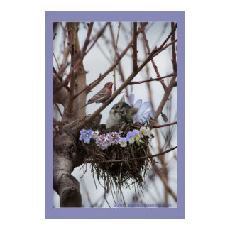 Cute kitten and bird nest poster