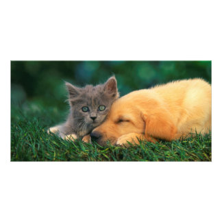 Cute Kitten and Puppy together Photo Card Template