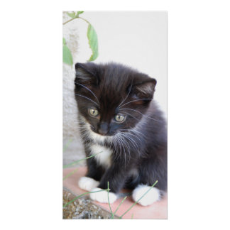 Cute Kitten Black White Cat Pet Purr Meow Kitty Perfect Poster