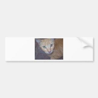 Cute kitten bumper sticker