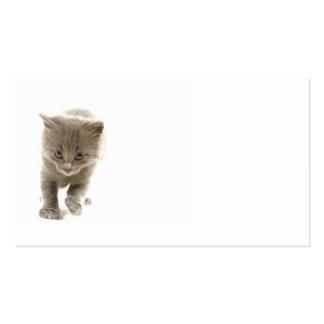 cute kitten business card template