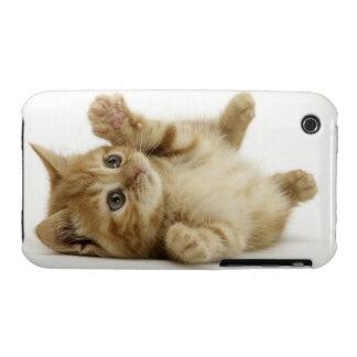 Cute Kitten Case-Mate iPhone 3 Case