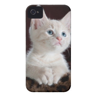 Cute Kitten Case-Mate iPhone 4 Case