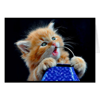 Cute kitten chewing. card