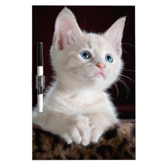Cute Kitten Dry Erase Board