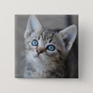 Cute Kitten In Garden Looking At Sky 15 Cm Square Badge