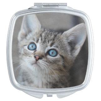 Cute Kitten In Garden Looking At Sky Mirror For Makeup