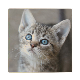 Cute Kitten In Garden Looking At Sky Wood Coaster