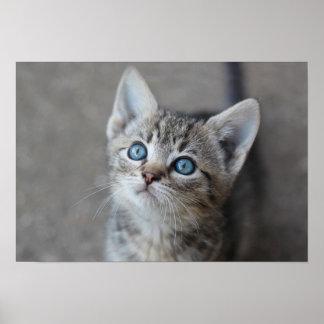Cute Kitten In the Garden Poster