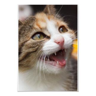 Cute Kitten Custom Invites