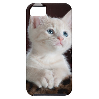 Cute Kitten iPhone 5 Covers