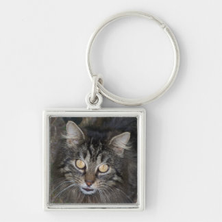 Cute Kitten Keychains