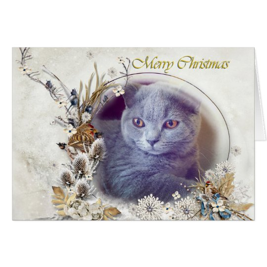 Cute kitten Merry Christmas card