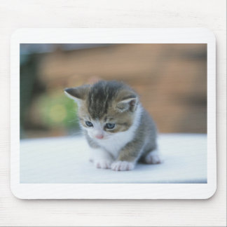 Cute Kitten Mouse Pad