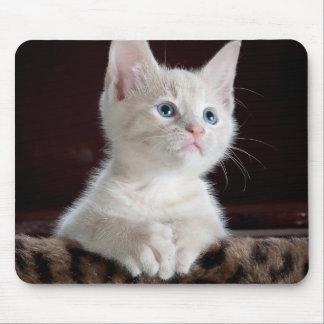 Cute Kitten Mouse Pad